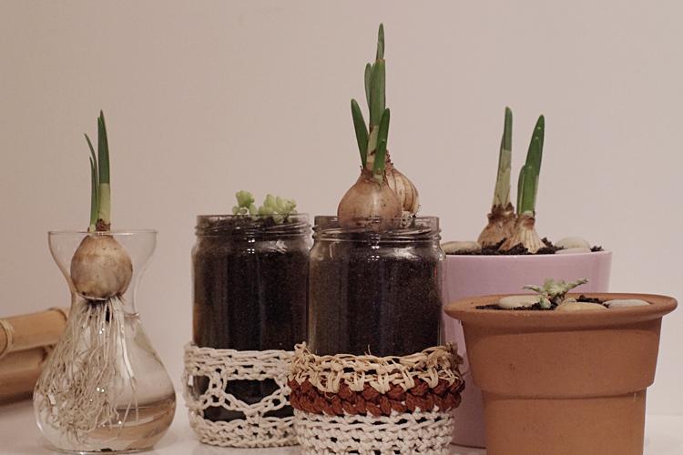 petit jardin d 39 int rieur pour le printemps apodioxe. Black Bedroom Furniture Sets. Home Design Ideas