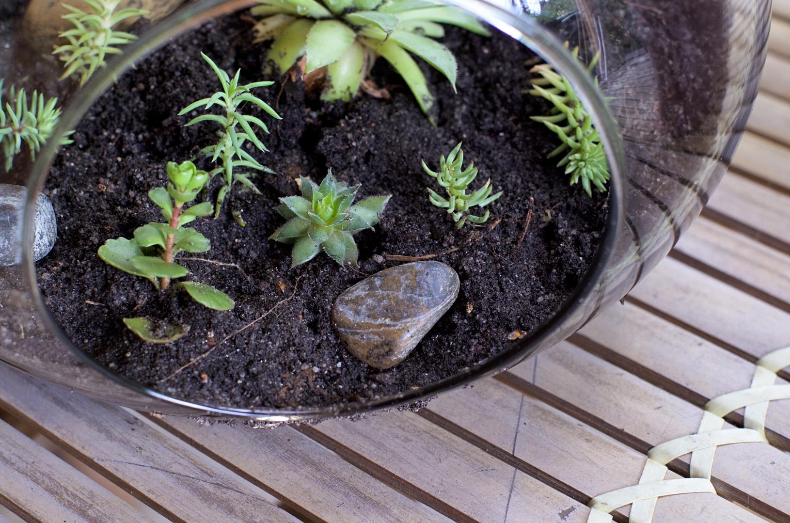 plantes succulentes terre jardin