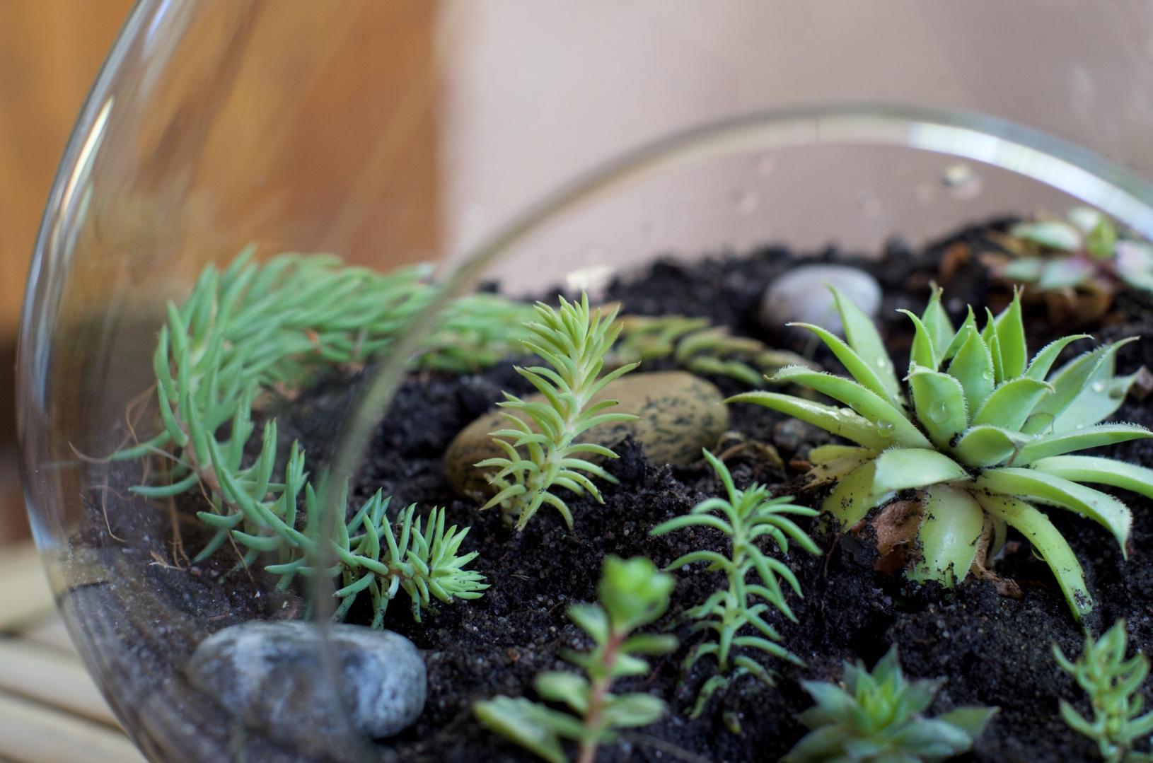 succulentes terrarium automne