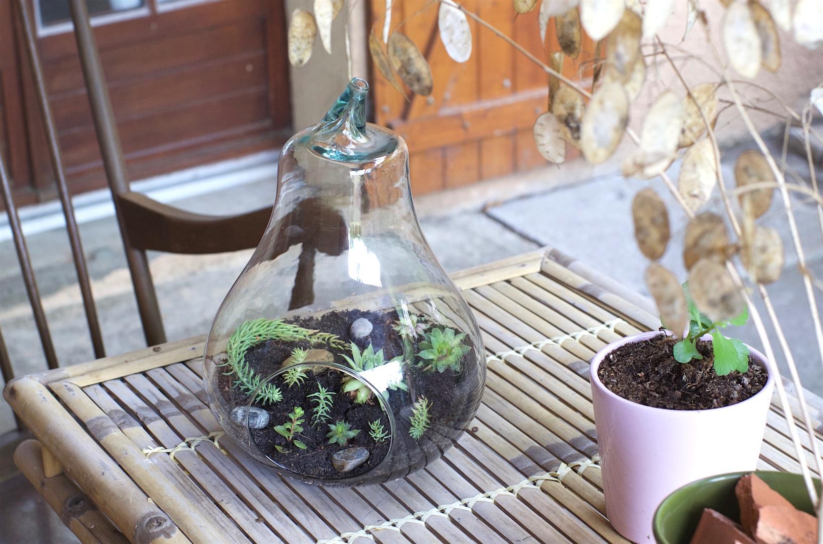 poire en verre terrarium