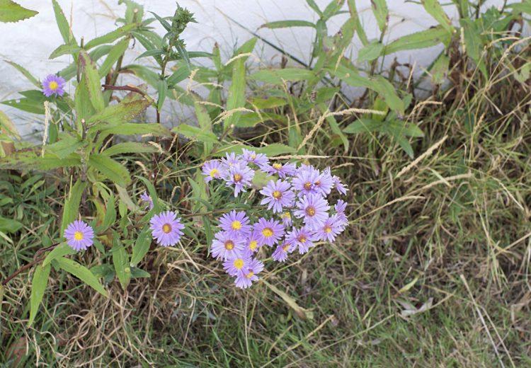 flowers-charente-maritime