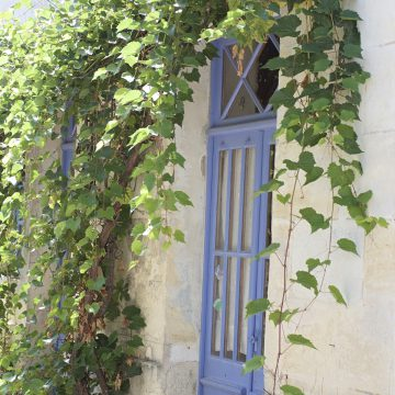 vigne-vierge-talmont